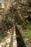 Turysta chodzi wzdłuż irygacyjnych kanałów Historyczny dostawa wody system, znać jako Levada w tropikalnym lesie, madery wyspa, Obraz Royalty Free