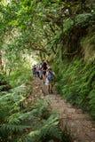 Turysta chodzi wzdłuż irygacyjnych kanałów Historyczny dostawa wody system, znać jako Levada w tropikalnym lesie, madery wyspa, Fotografia Stock