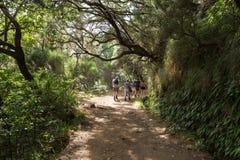 Turysta chodzi wzdłuż irygacyjnych kanałów Historyczny dostawa wody system, znać jako Levada w tropikalnym lesie, madery wyspa Obrazy Royalty Free