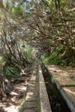 Turysta chodzi wzdłuż irygacyjnych kanałów Historyczny dostawa wody system, znać jako Levada w tropikalnym lesie, madery wyspa, Zdjęcia Royalty Free