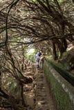 Turysta chodzi wzdłuż irygacyjnych kanałów Historyczny dostawa wody system, znać jako Levada w tropikalnym lesie, madery wyspa Zdjęcie Stock