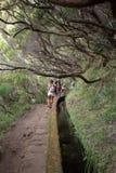 Turysta chodzi wzdłuż irygacyjnych kanałów Historyczny dostawa wody system, znać jako Levada w tropikalnym lesie, madery wyspa Obrazy Stock