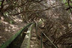 Turysta chodzi wzdłuż irygacyjnych kanałów Historyczny dostawa wody system, znać jako Levada w tropikalnym lesie, madery wyspa Fotografia Stock
