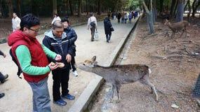 Turysta greeted rogaczem od niedalekiego Nara parka na podejściu Todaiji Zdjęcie Royalty Free