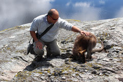 Turysta klepie kangura obrazy stock