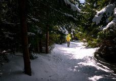 Turysta pochodzi przez zima lasu obrazy stock