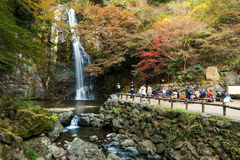 turysta wizyty Minoo siklawa, Osaka Zdjęcie Royalty Free