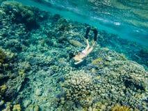 Turysty Snorkeling Turkusowy Czerwony morze Egipt obrazy stock