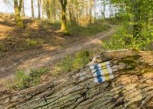 Turysty znak na spadać bagażniku stary drzewo - Polska Fotografia Stock
