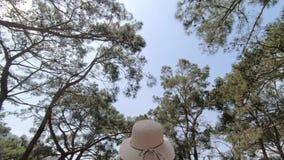 Turystyczna dziewczyna chodzi wolno pod wysokimi iglastymi drzewami zbiory wideo
