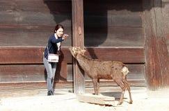 Turystyczna dziewczyna postępuje karmić jedzenie dla rogacza na tło drewnianym budynku przed Todai-ji świątynią Obrazy Stock