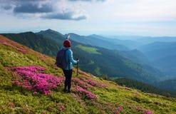 Turystyczna dziewczyna z plecy workiem i tropić kijami zostaje na gazonie wśród krzaków różowi różaneczniki Zdjęcie Royalty Free