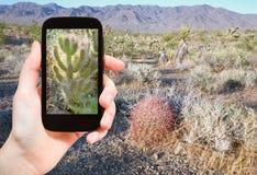 Turystyczna mknąca fotografia kaktus w Mojave pustyni Obrazy Royalty Free