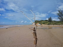 Tusan strand Arkivbilder