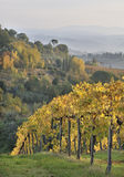 tuscan αμπελώνας φθινοπώρου Στοκ Φωτογραφίες