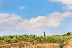 Tuscan καλοκαίρι στους τομείς κατά την όμορφη άποψη Στοκ Εικόνες