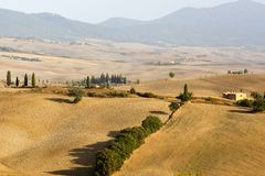 Tuscan λόφοι με τις ελιές στην Ιταλία Στοκ φωτογραφία με δικαίωμα ελεύθερης χρήσης