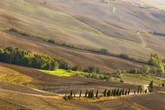 Tuscan λόφοι με τις ελιές στην Ιταλία Στοκ εικόνα με δικαίωμα ελεύθερης χρήσης