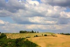 ландшафт tuscan Италии стоковое фото rf
