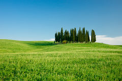 Tuscan. Typical tuscan landscape with cypress trees royalty free stock images