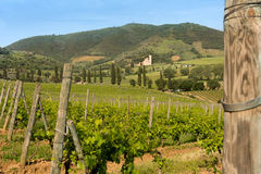 Tuscan abbey and vineyards Royalty Free Stock Photo