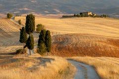 Tuscan bygd på solnedgången, Italien royaltyfri bild