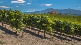 Tuscan Castle Overseeing Vineyards. With Rows of grapes from a Hill on a Clear Summer Day stock photos