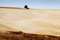 Tuscan Country near Montalcino Royalty Free Stock Image