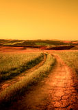 Tuscan country road stock photos