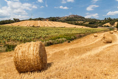 Tuscan countryside Royalty Free Stock Photography