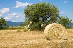 Tuscan countryside with a bale of hay Royalty Free Stock Image