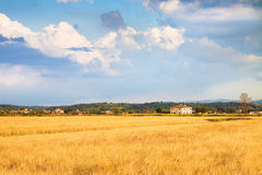 Tuscan countryside. With cornfield in the foreground (Italy Stock Image
