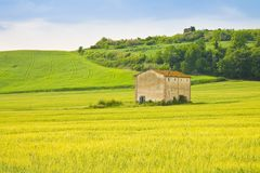 Tuscan countryside with cornfield in the foreground Italy - Im. Age with copy space Royalty Free Stock Images