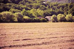 Tuscan countryside with cornfield in the foreground Italy - to. Ned image Royalty Free Stock Photo