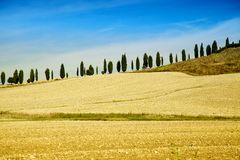 Tuscan Countryside with Cypress Trees in a Row Stock Image