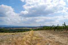 Tuscan countryside. On the first days of September . San Gimignano, Siena, Italy Royalty Free Stock Photos