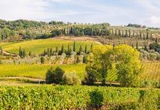 Tuscan countryside - Montalcino. Vivid Tuscan autumn countryside with vineyards and pine trees near Montalcino, Italy Stock Photos