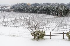 The Tuscan countryside and vineyards covered by snow, Pisa, Tuscany, Italy royalty free stock photo