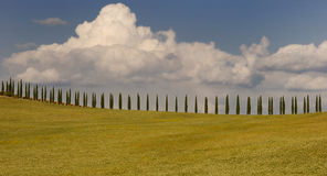 Tuscan cypress. Typical tuscan landscape near by Pienza Royalty Free Stock Images