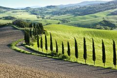 A Tuscan cypress alley in the great green fields royalty free stock image