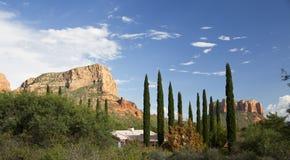Tuscan Cypress in Sedona Royalty Free Stock Image