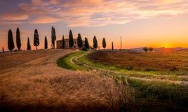 Tuscan cypress Stock Photography