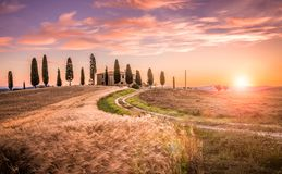 Tuscan cypress trees landscape Stock Photo