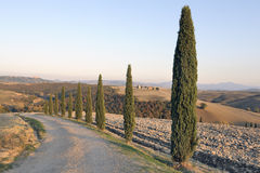 Tuscan cypress trees at sunset Stock Photos