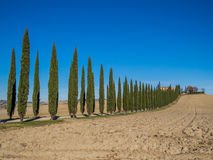 Tuscan cypresses. Charming countryside road with cypresses against deep blue sky in the Val d'Orcia region (or Valdorcia) in Tuscany, Italy Stock Photo