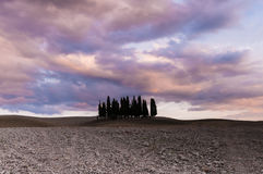 Tuscan cypresses. A field with a group of cypresses planted togheter in Val d'Orcia, Tuscany Italy. Cloudy and dramatic sky above the trees and beautiful hills Stock Photography