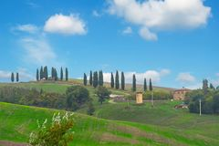 Tuscan cypresses on a hill. Cypresses on a Tuscan hill, Italy Royalty Free Stock Images