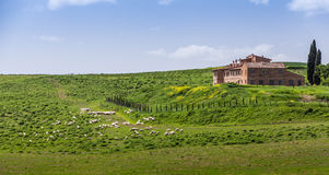 Tuscan farm villa. Farm villa in Tuscany with cypress trees Stock Photography