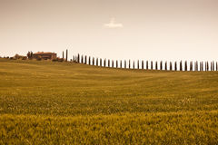Tuscan farmhouse and cypress trees Stock Photo