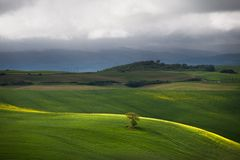 Tuscan fields Stock Photography